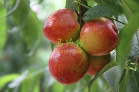 水果之乡一年四季吃遍乐昌水果