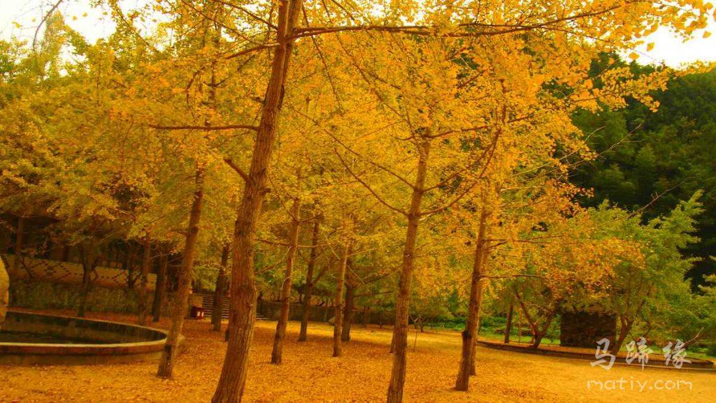 冬日,我们一起去看秋